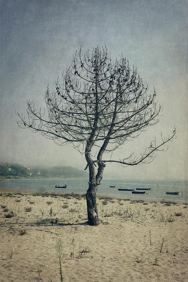 Beach Photograph - Naked Tree by Marco Oliveira