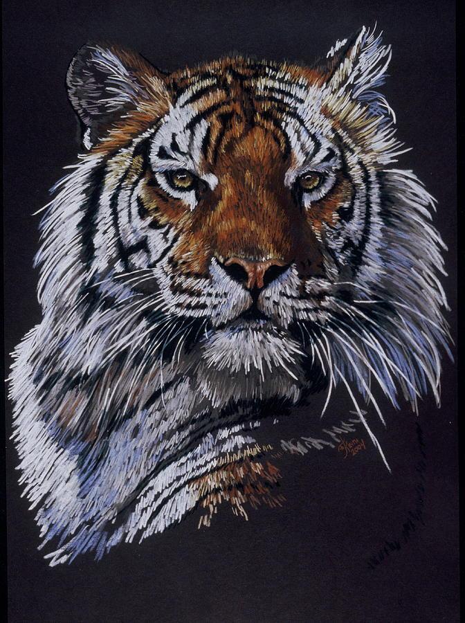 Tiger Drawing - Nakita by Barbara Keith