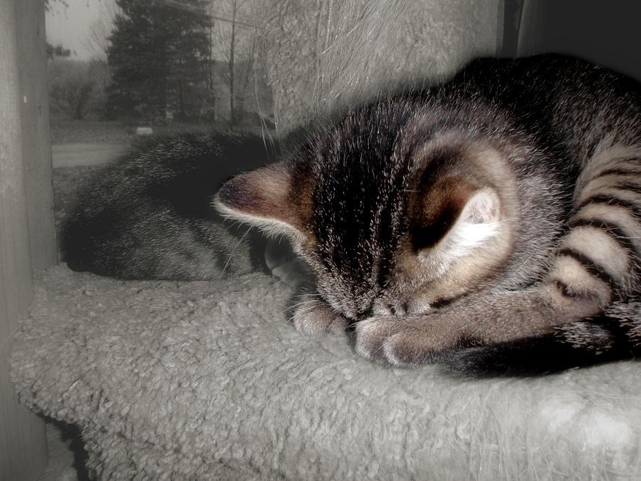 Kitten Photograph - Namaste by JAMART Photography