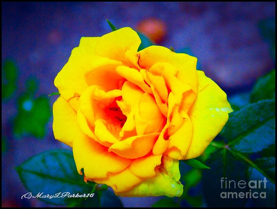 Photograph Photograph - Nanas Yellow Rose by MaryLee Parker