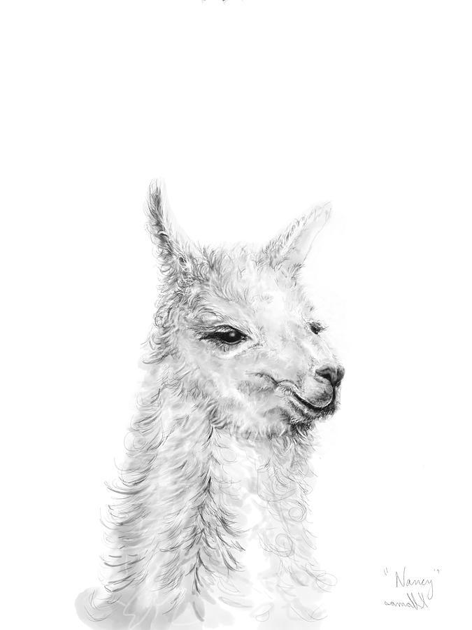 Llamas Drawing - Nancy by K Llamas