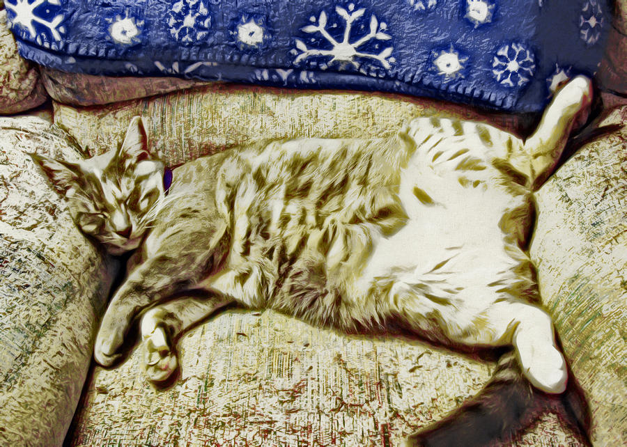 Cat Photograph - Nap Position Number 16 by David G Paul