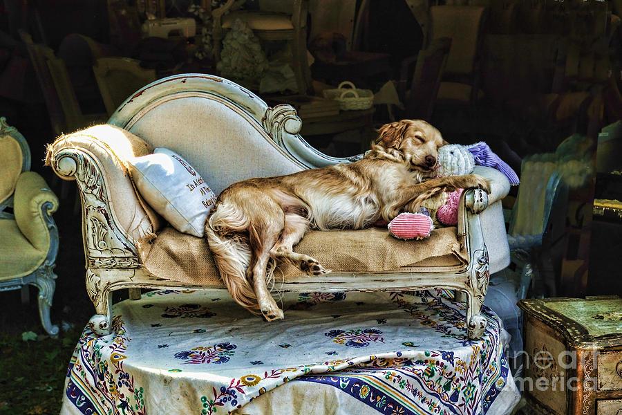Dog Photograph - Nap Time by Edward Sobuta