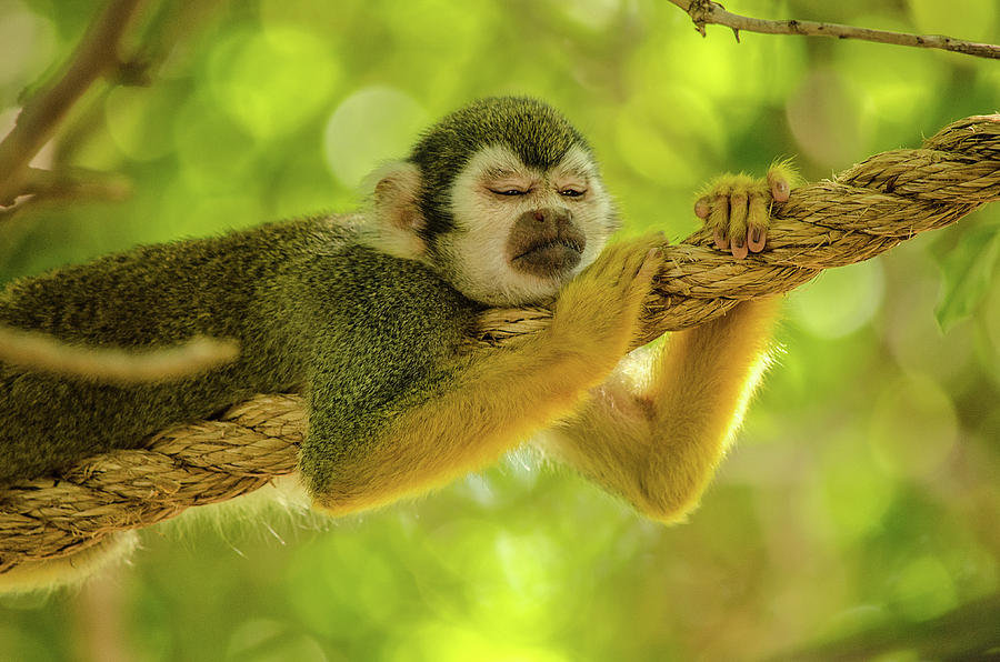 Mammal Photograph - Nap Time by Emily Bristor