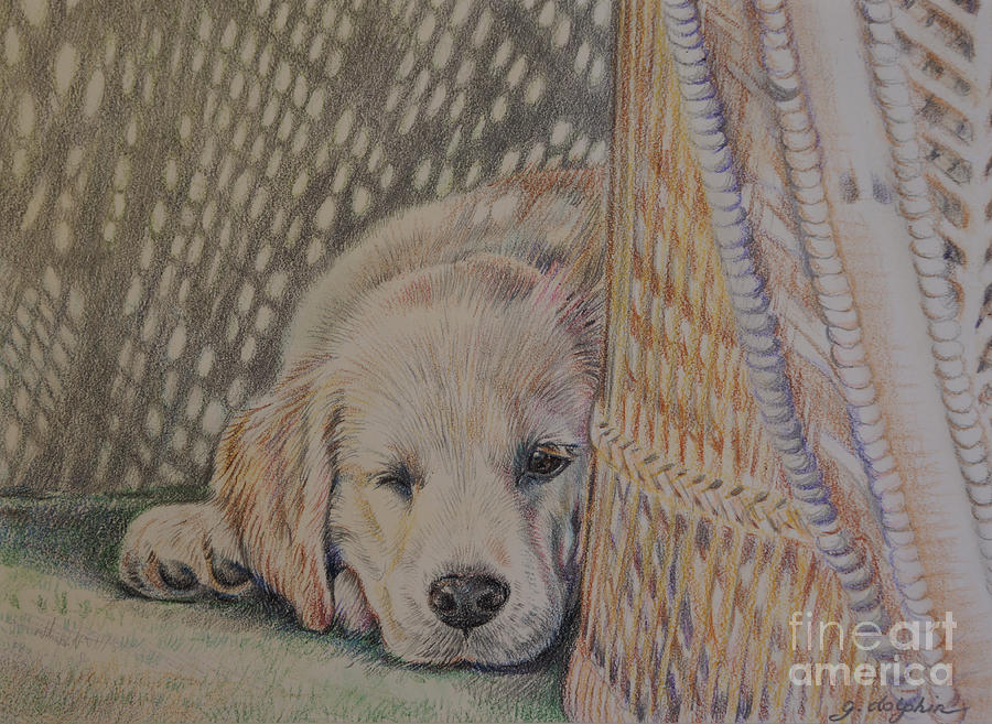 Puppy Drawing - Nap Time by Gail Dolphin