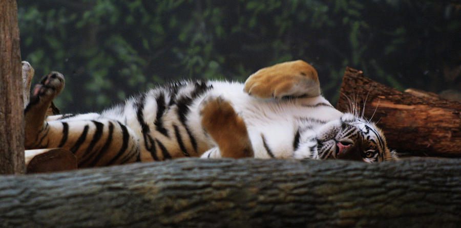 Nap Time by Jean Wolfrum