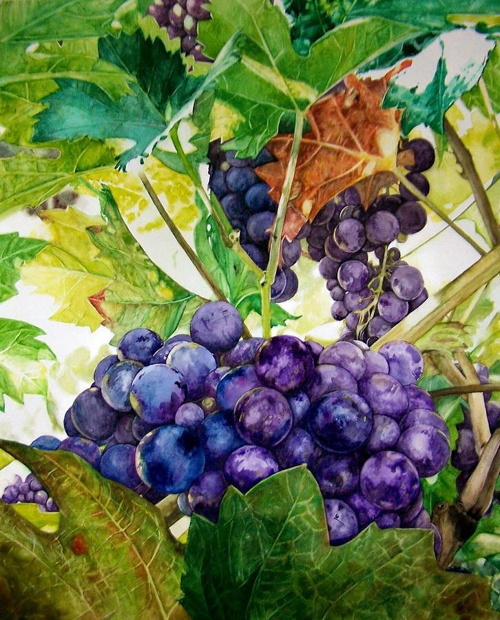 Grapes Painting - Napa Harvest by Lance Gebhardt