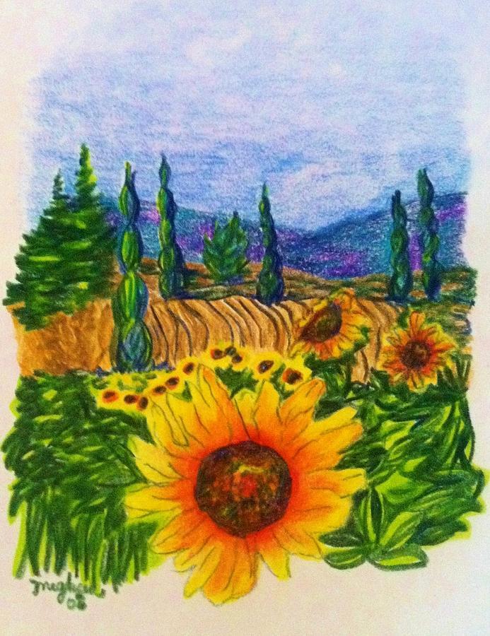 Napa Sunflower Drawing