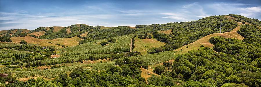 Napa Valley California Panoramic by Adam Romanowicz