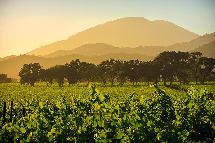 Vineyard Photograph - Napa Valley Vineyard At Dusk by Dina Calvarese