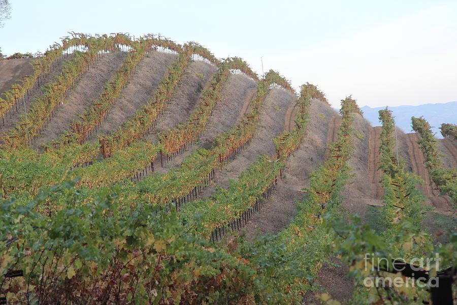 Wine Corks Photograph - Napa Vineyard by Anthony Jones