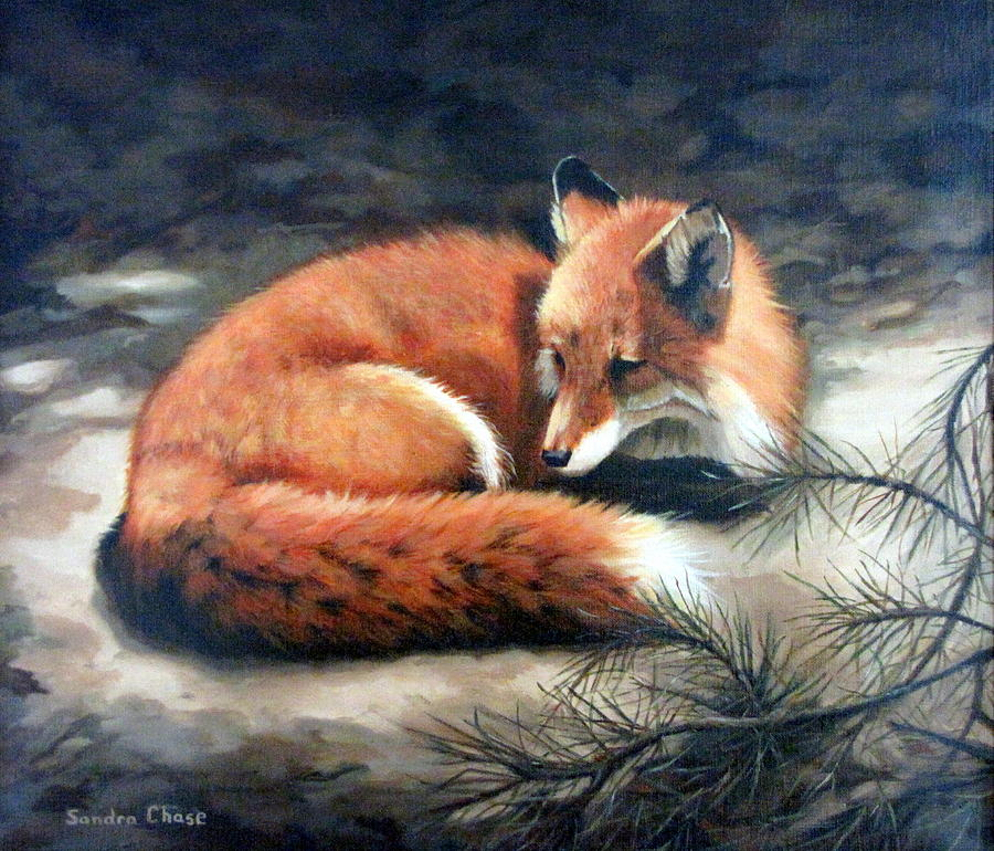 Red Fox Painting - Naptime In The Pine Barrens by Sandra Chase