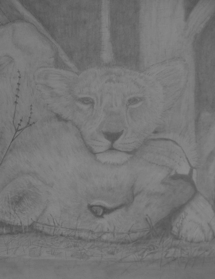 Lions Drawing - Naptime by Jose Cabral