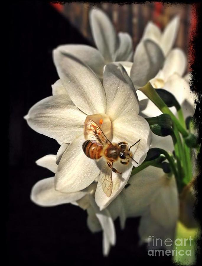 Narcissus and the Bee 3 by Daniele Smith