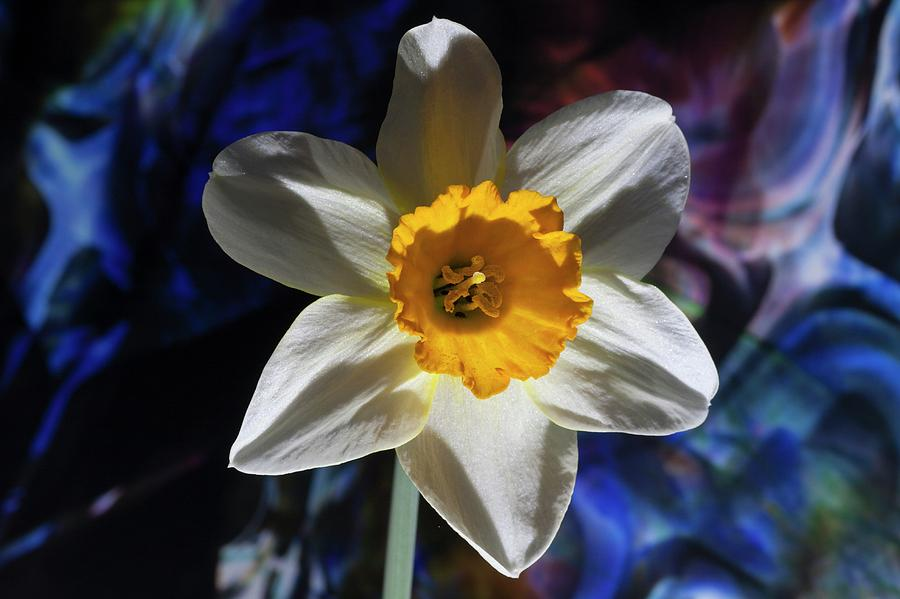 Narcissus in the Garden of the Unconscious II by Richard Thomas