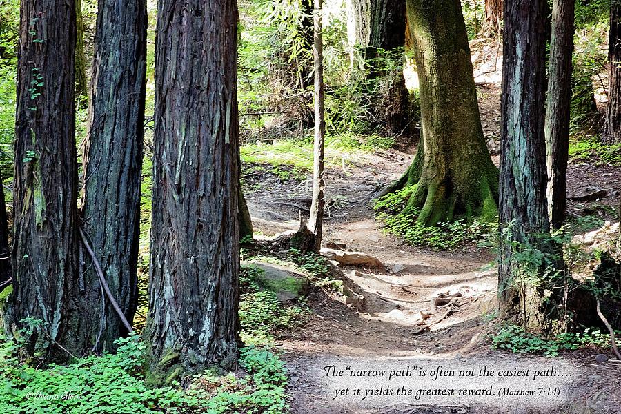Narrow Path by Deana Glenz