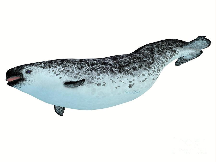 Narwhal Female Whale Digital Art by Corey Ford