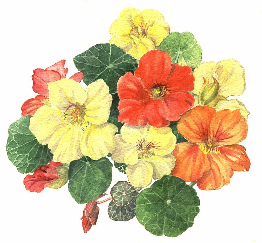 Flower Painting - Nasturtiums by Maureen Carter