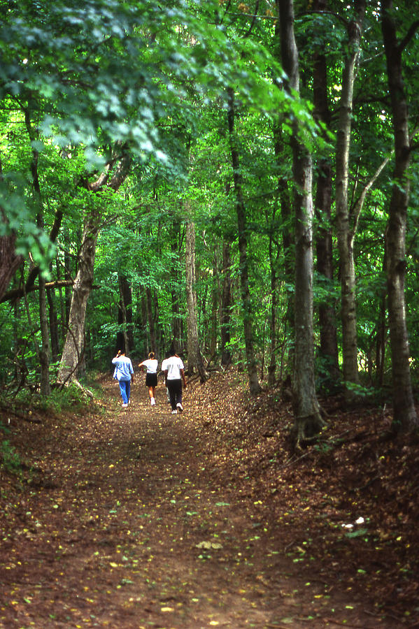 Tennessee Photograph - Natchez Trace Walkers by Randy Muir