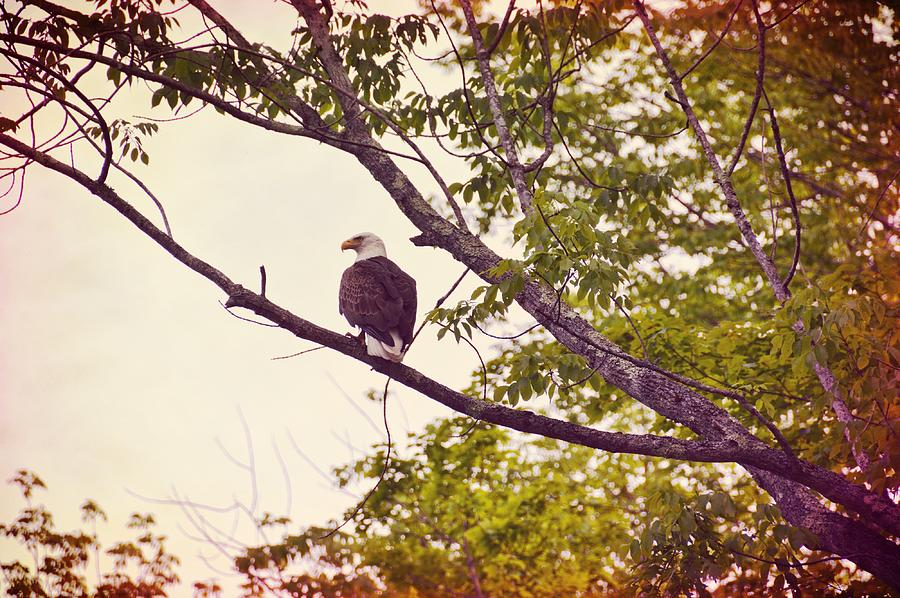 Bald Photograph - National Symbol by JAMART Photography
