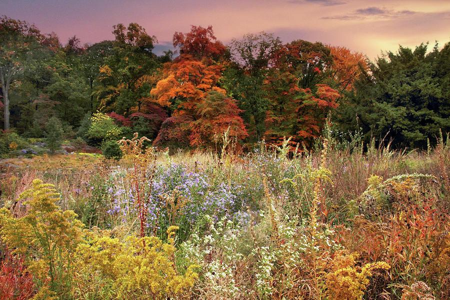 Native Garden Sunset Photograph