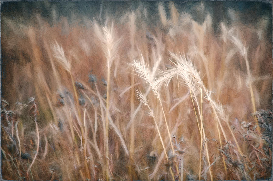365 Project Photograph - Native Grass by Scott Norris