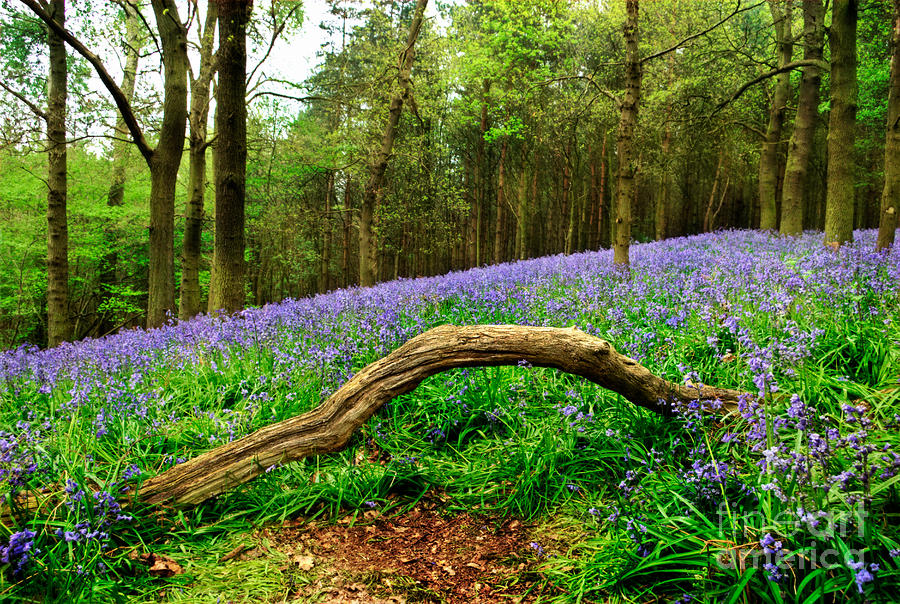 Spring Photograph - Natural Arch And Bluebells by John Edwards