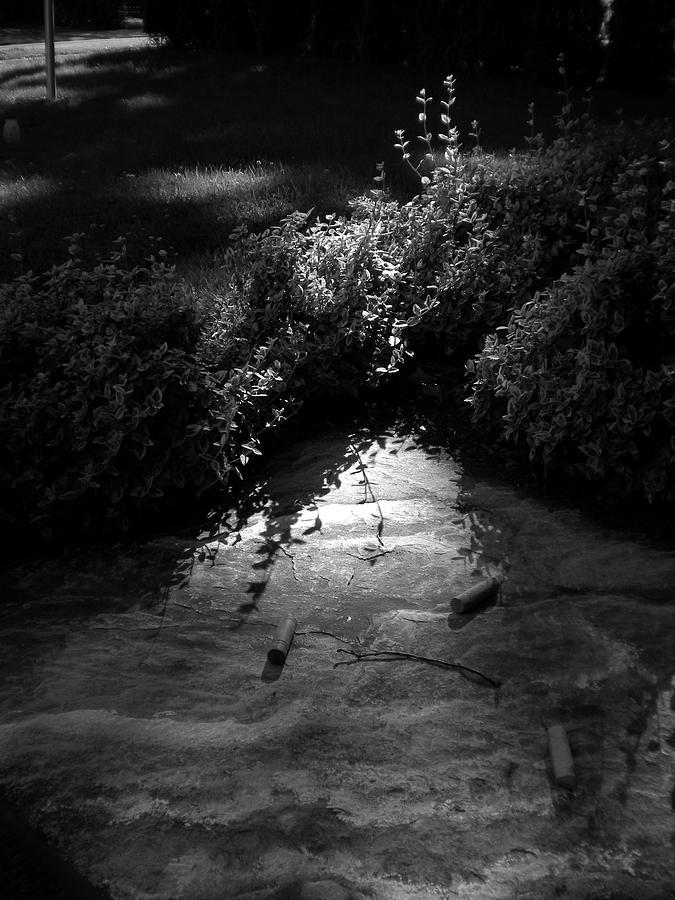 Black & White Photograph - Natural Art by Bailey Joyce