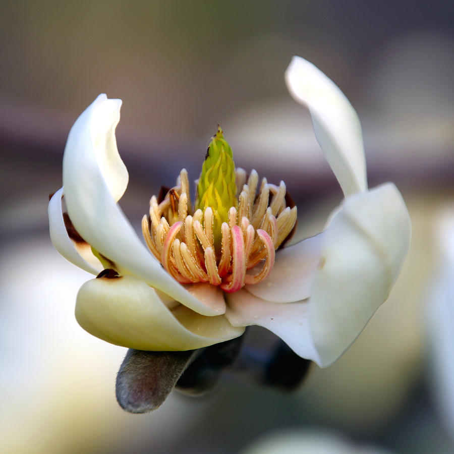 Floral Photograph - Natural Beauty by Debbie Nobile