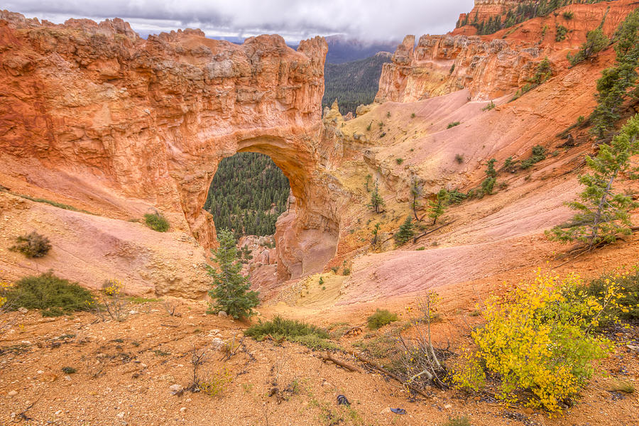 Natural Photograph - Natural Bridge by Kristina Rinell
