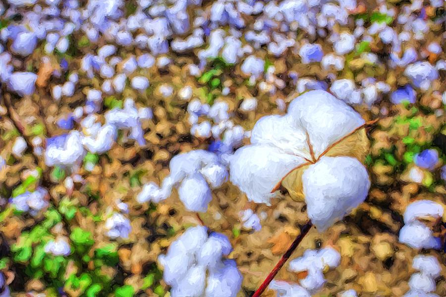Cotton Photograph - Natural Cotton by JC Findley