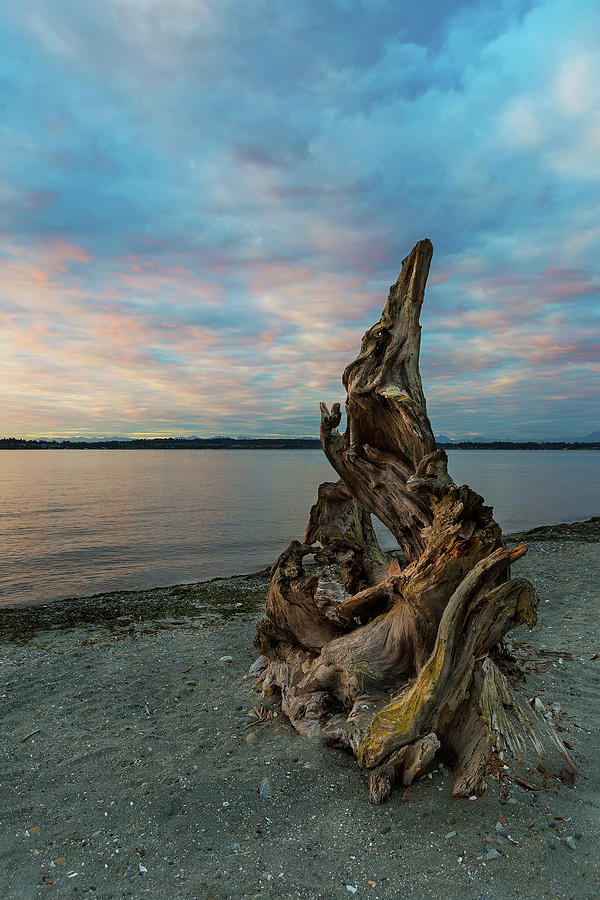 Driftwood Photograph - Natural Driftwood At Birch Bay State Park by David Gn