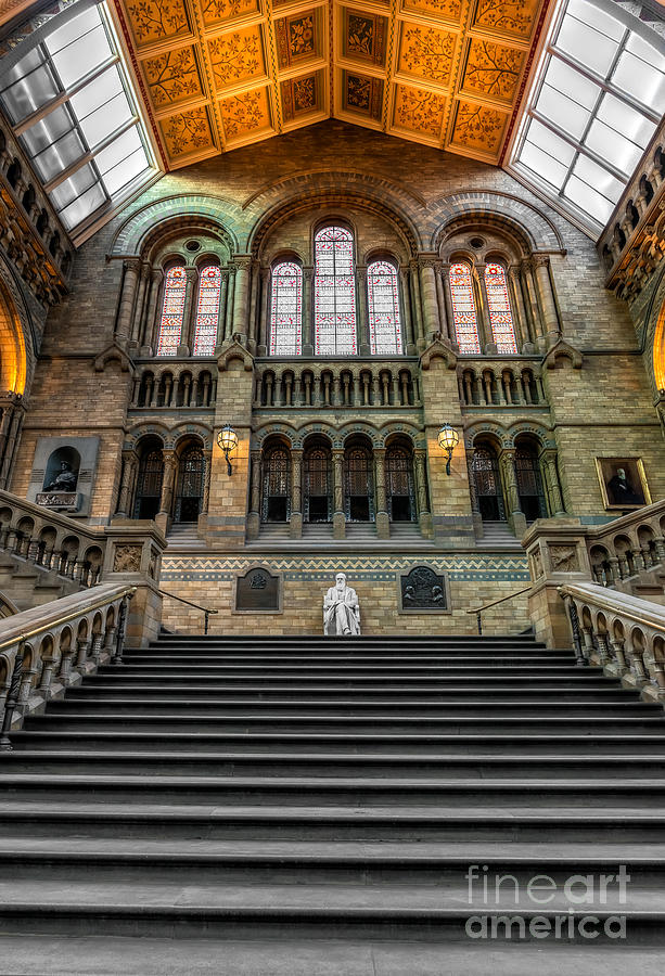 London Photograph - Natural History Museum by Adrian Evans