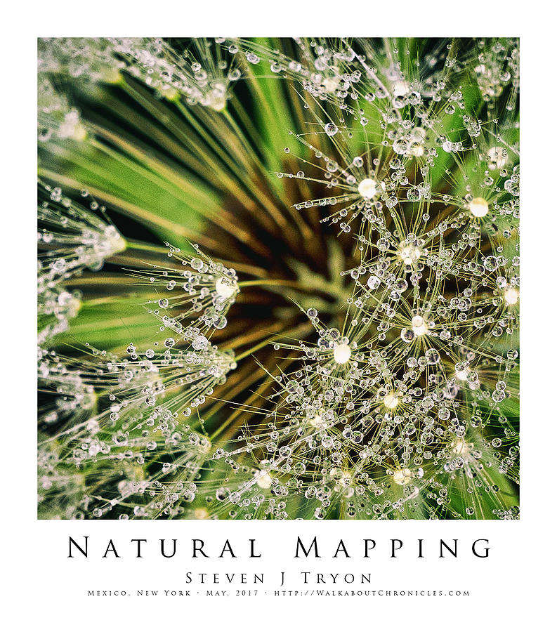 Dandelion Photograph - Natural Mapping by Steven Tryon
