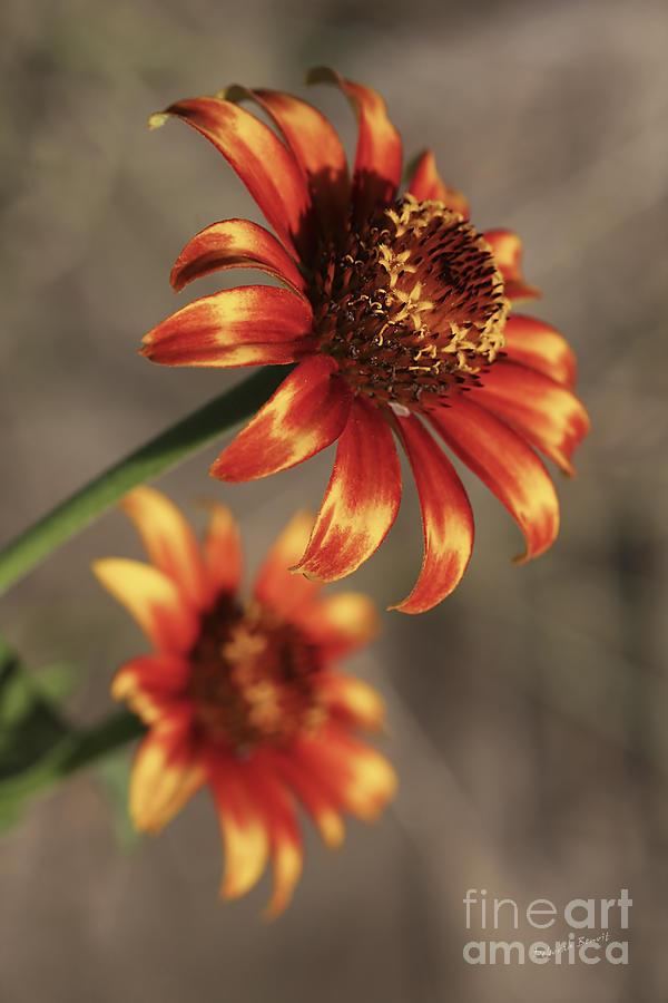 Flower Photograph - Natural Posing Beauty by Deborah Benoit