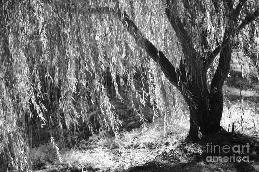 Screen Photograph - Natural Screen by Gerlinde Keating - Galleria GK Keating Associates Inc