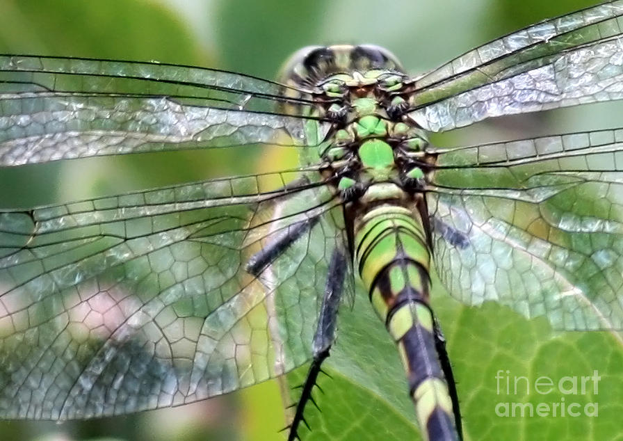Nature Photograph - Natural Stained Glass by Carol Groenen