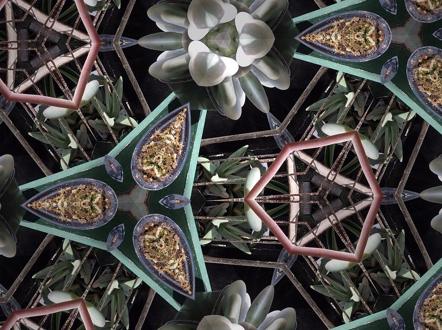 Pattern Photograph - Nature And Geometry by Sylvan Adams