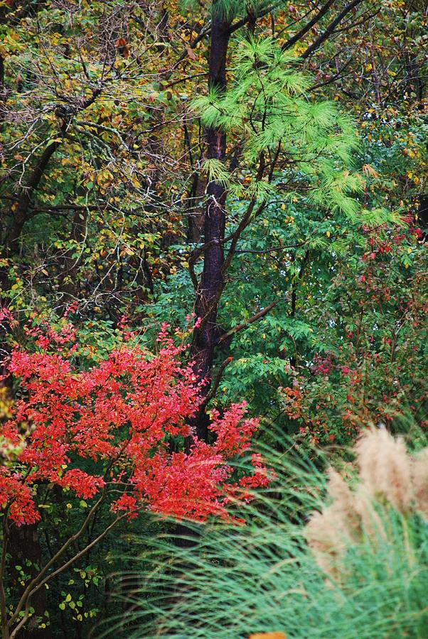 Trees Photograph - Nature In All Her Beauty by Trudi Southerland
