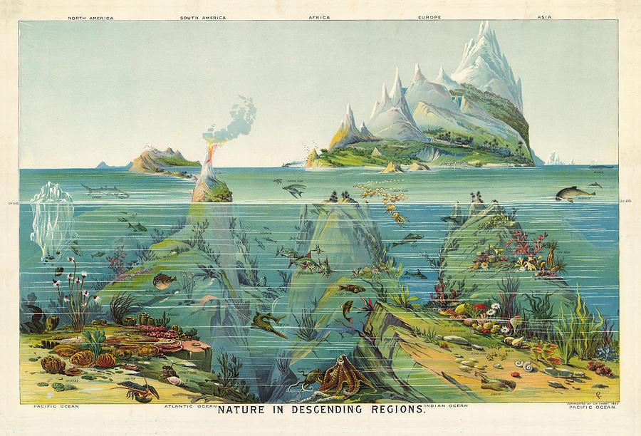 Nature - In - Descending - Regions - Geological Chart Drawing