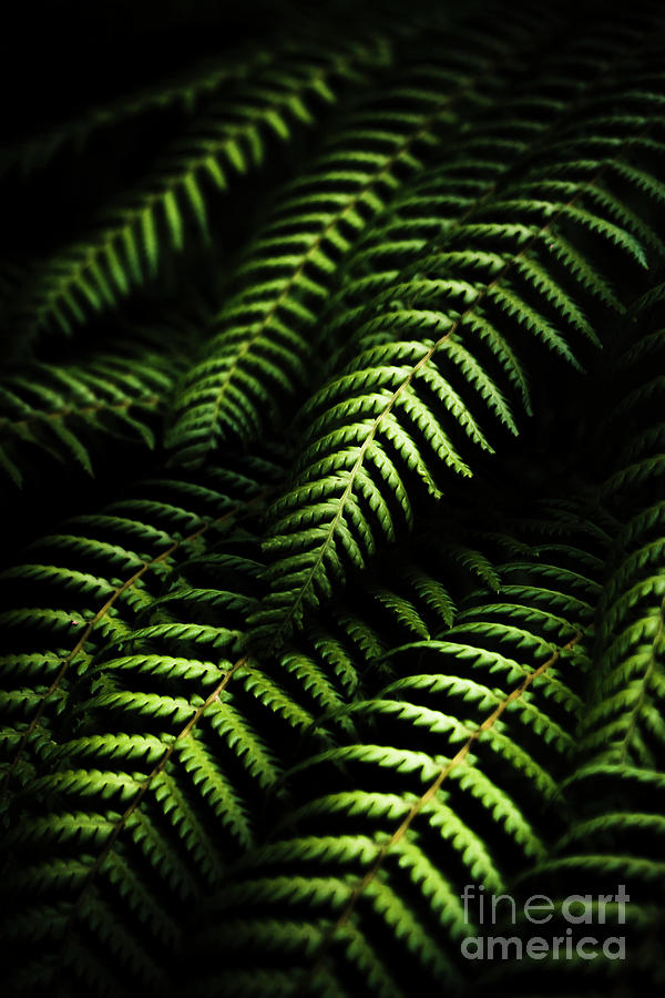 Tropical Photograph - Nature In Minimalism by Jorgo Photography - Wall Art Gallery