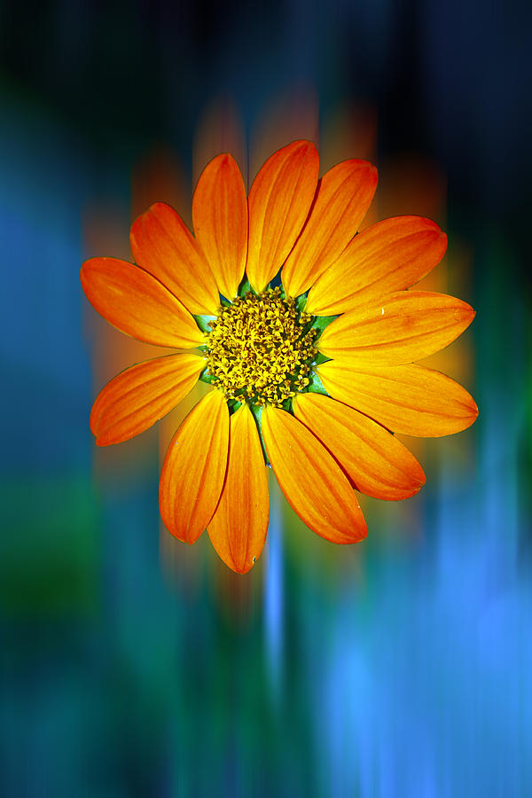 Flower Photograph - Nature In Motion by Wendy Mogul