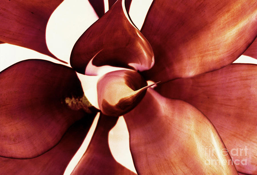 Succulent Photograph - Nature In Negative Nine by Matthew Syres