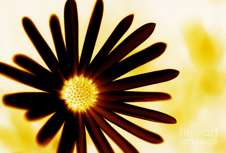 Flower Photograph - Nature In Negative Two by Matthew Syres