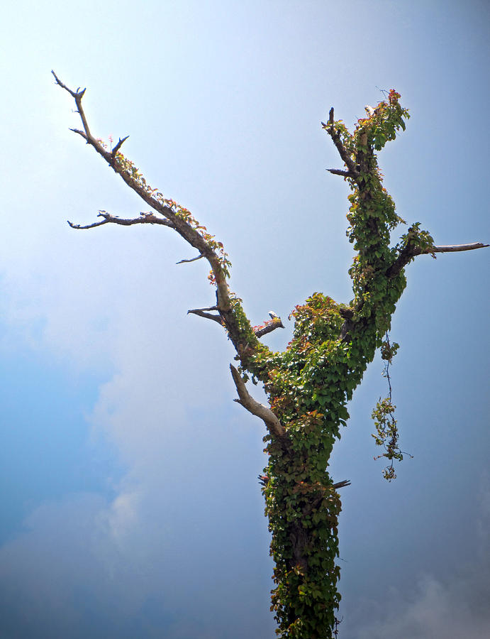 Tree Photograph - Nature In Praise by Richard Nickson