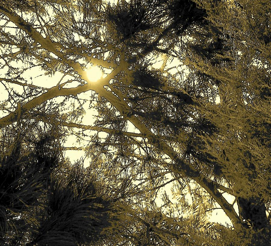 Abstract Photograph - Nature In The Crosshairs by Lenore Senior