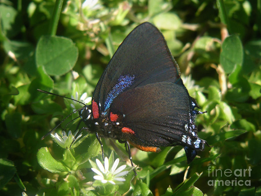 Nature Photograph - Nature In The Wild - Black Beauty by Lucyna A M Green