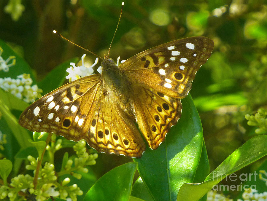 Nature Photograph - Nature In The Wild - Kaleidoscope Of Color by Lucyna A M Green