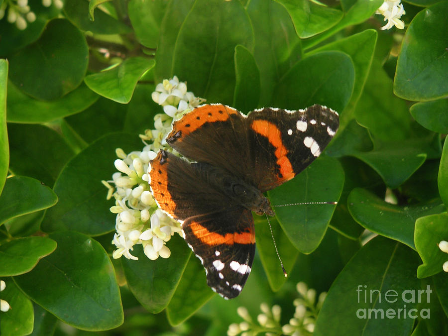 Nature Photograph - Nature In The Wild - Landing Perfectly by Lucyna A M Green