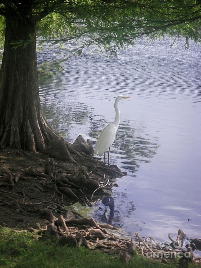 Nature Photograph - Nature In The Wild - Musings By A Lake by Lucyna A M Green